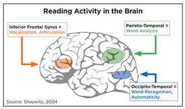 Reading Brain Activity